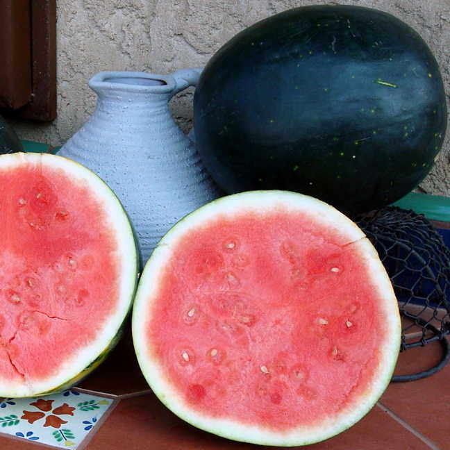 seedless watermelon vs seeded