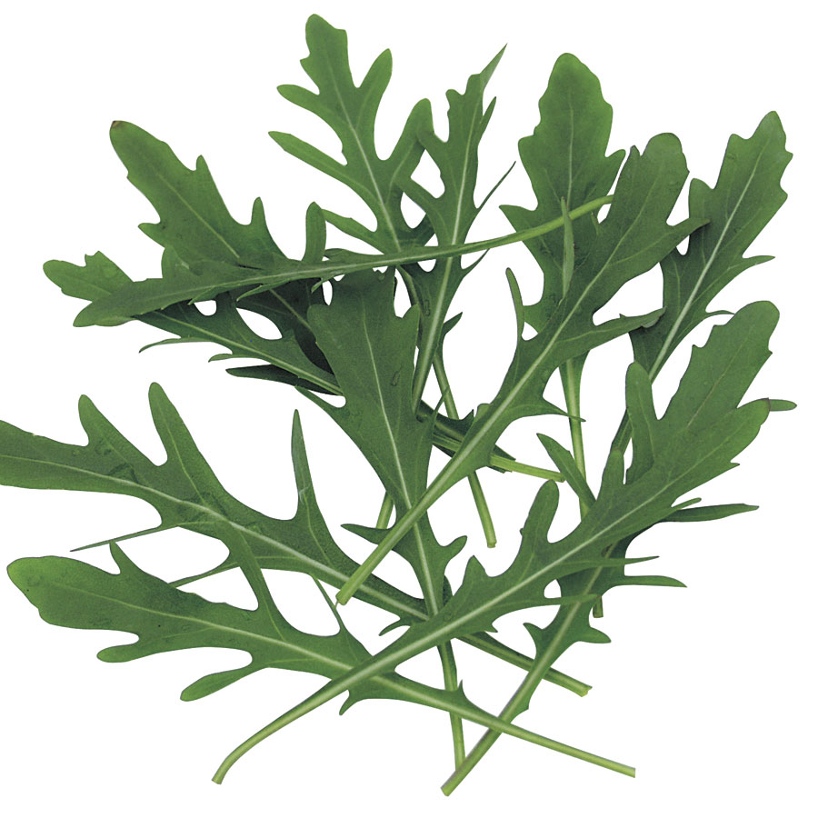 Speedy Arugula Seeds Image