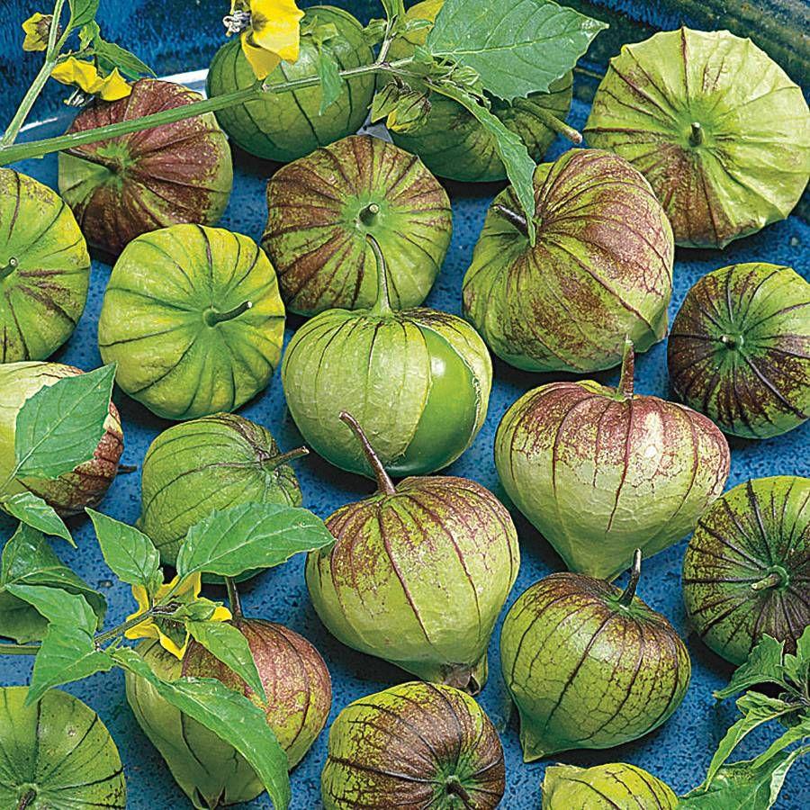 Purple Tomatillo Seeds Image