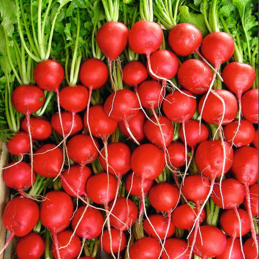 radish seeds Use our radish seeds for sale to grow a crop of delicious radishes all of our vegetable seeds are 100% gmo-free, and even home gardeners will find them easy to grow.