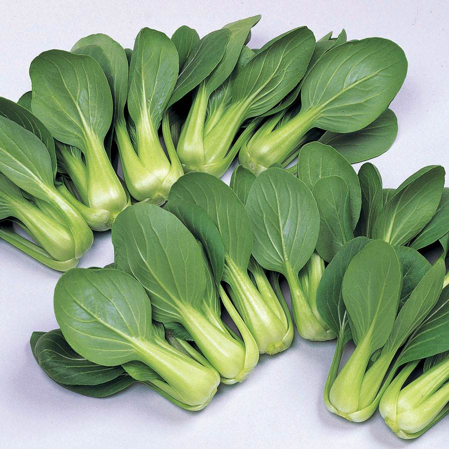 li ren choy hybrid pak choi seeds from park seed. Black Bedroom Furniture Sets. Home Design Ideas