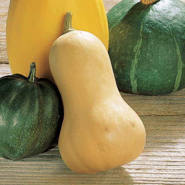 Waltham Butternut Organic Squash Seeds Image