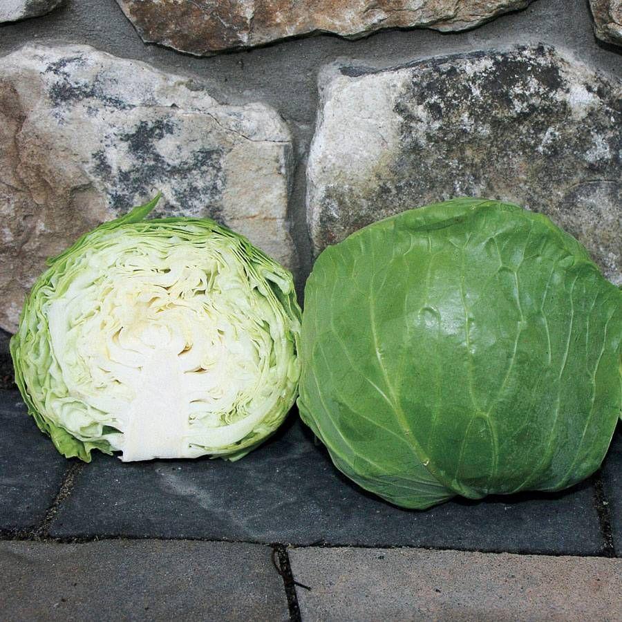 Katarina Hybrid Cabbage Seeds Image