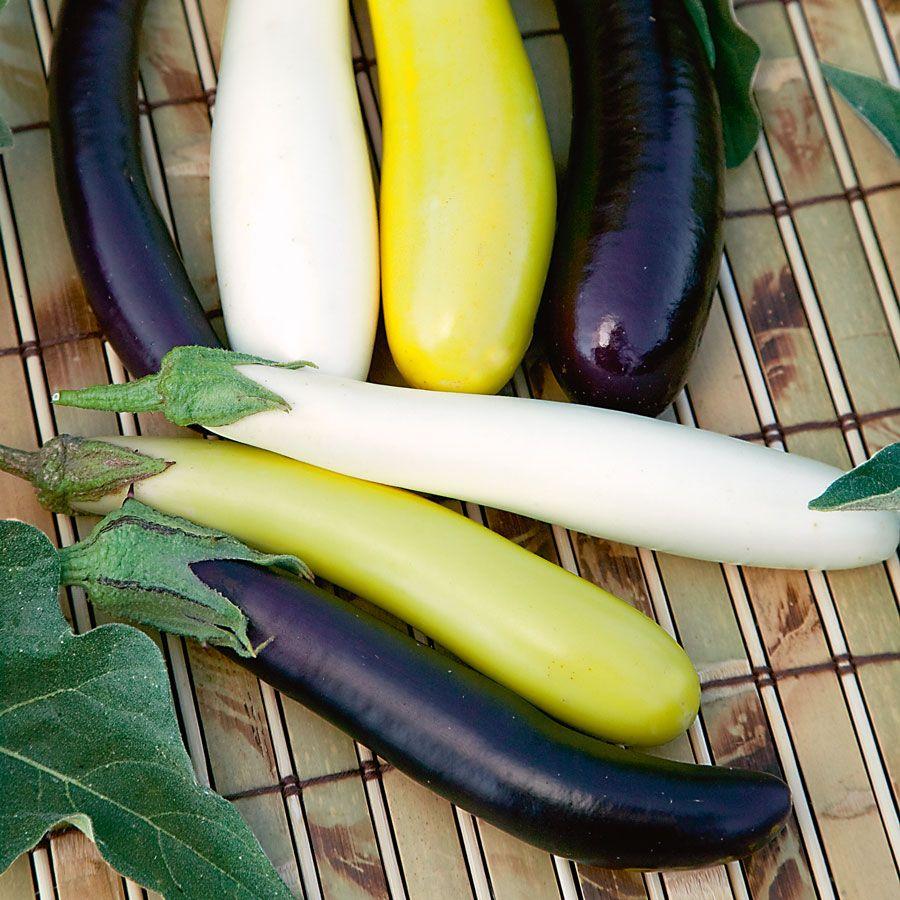 Fingerling Blend Eggplant Seeds Image