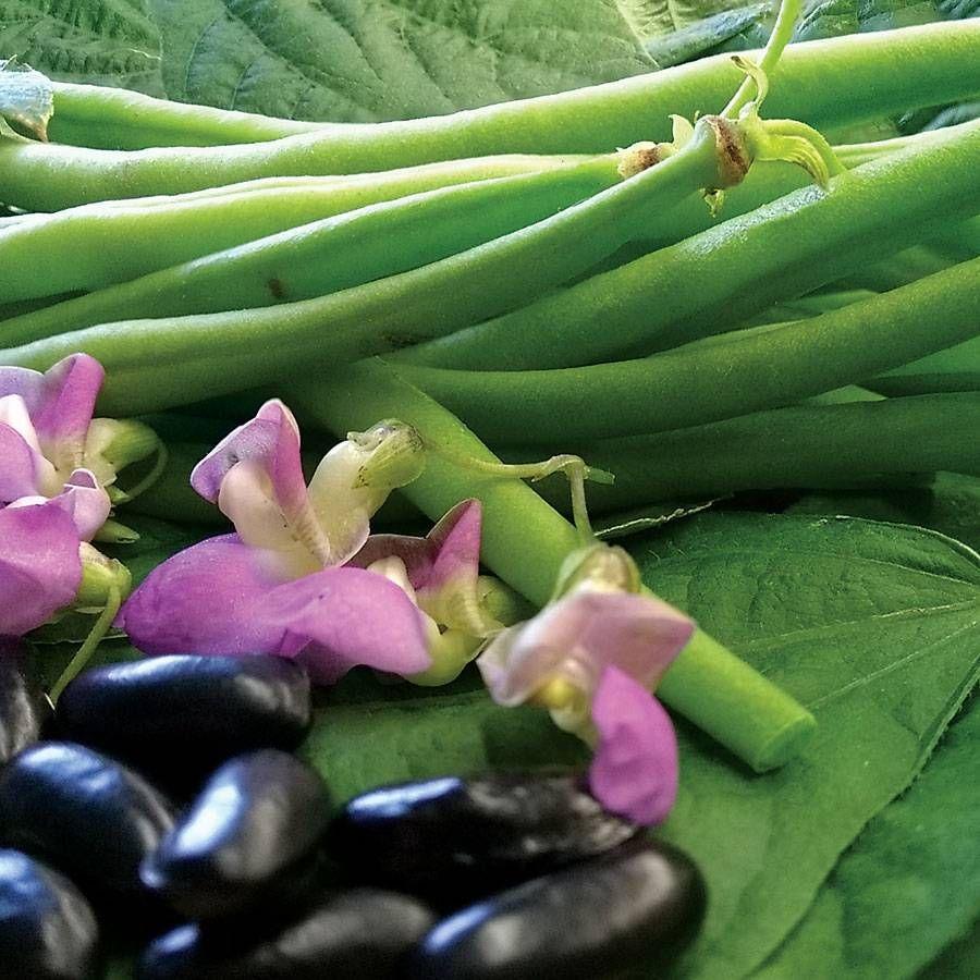 Nautica Bush Bean Seeds Image