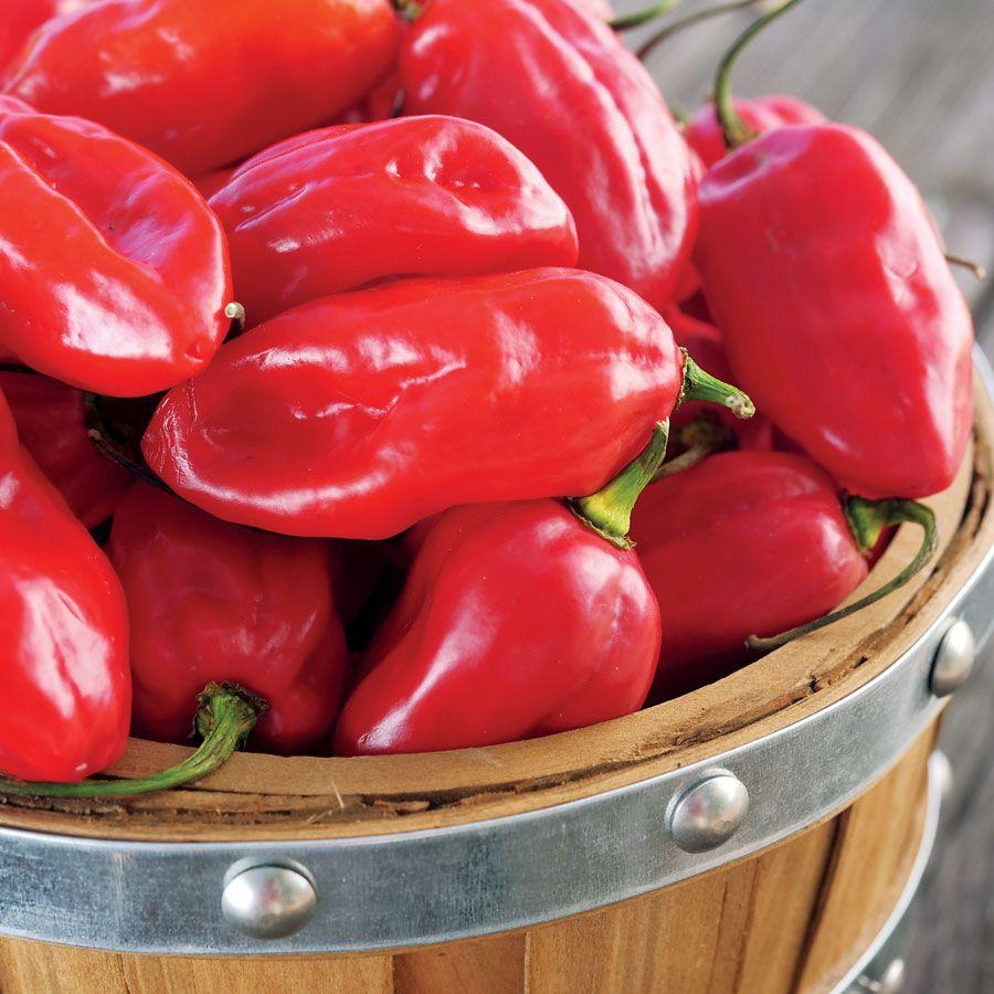Roulette Hybrid Pepper Seeds Image