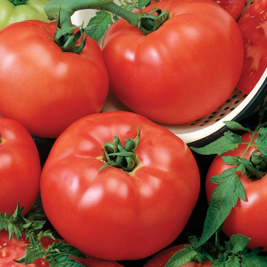 Chef's Choice Red Hybrid Tomato Seeds Image