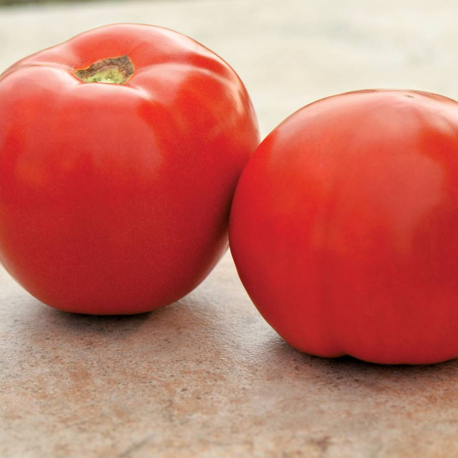 Roadster Hybrid Tomato Seeds Image
