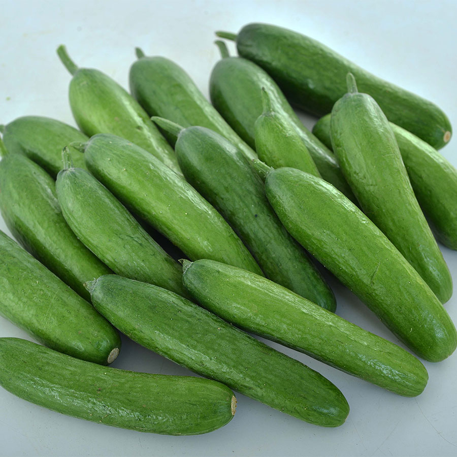 Green Light F1 Cucumber Seeds Image
