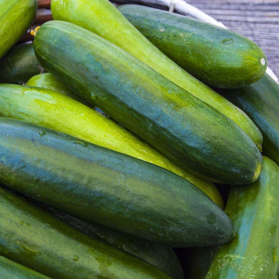 Paraiso Organic Cucumber Seeds Image