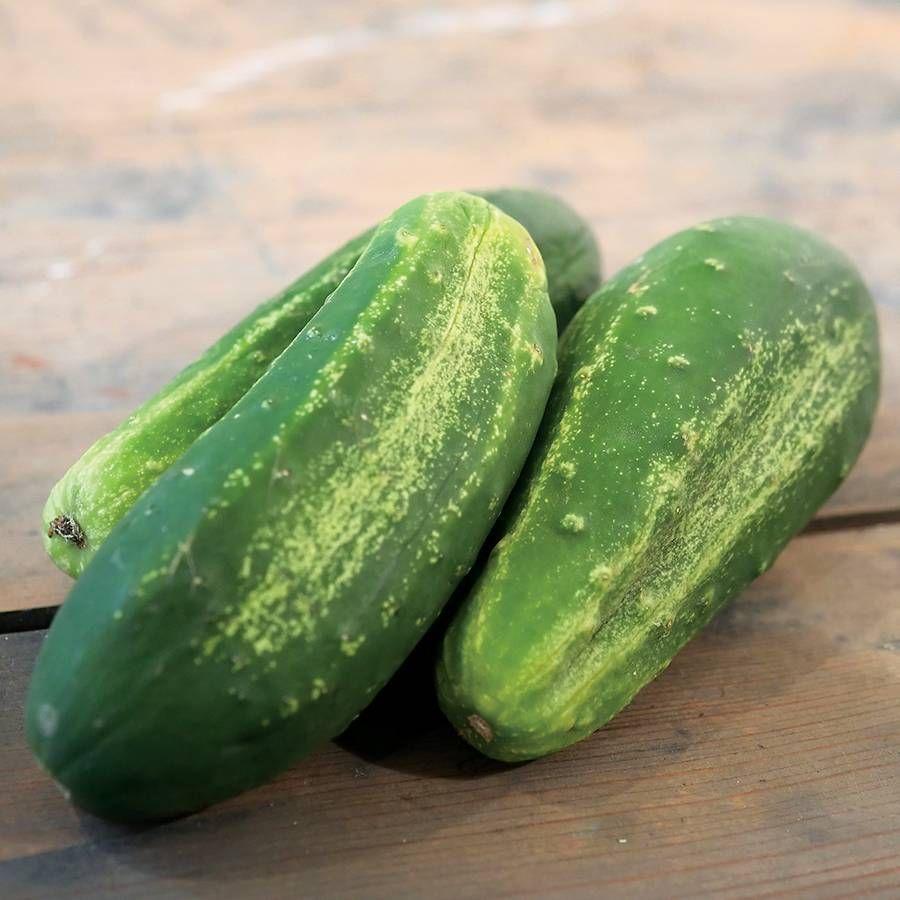 Excelsior Organic Cucumber Seeds Image