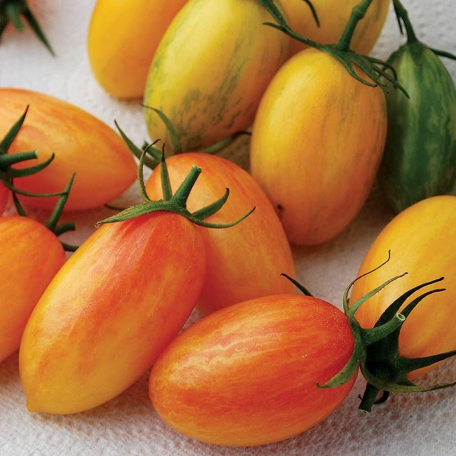 Artisan - Blush Organic Hybrid Cherry Tomato Seeds Image