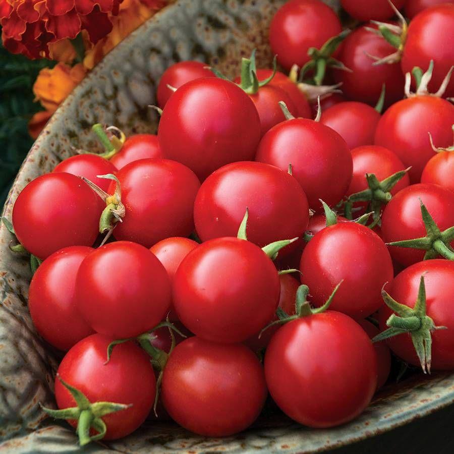 Organic Tomato Sakura