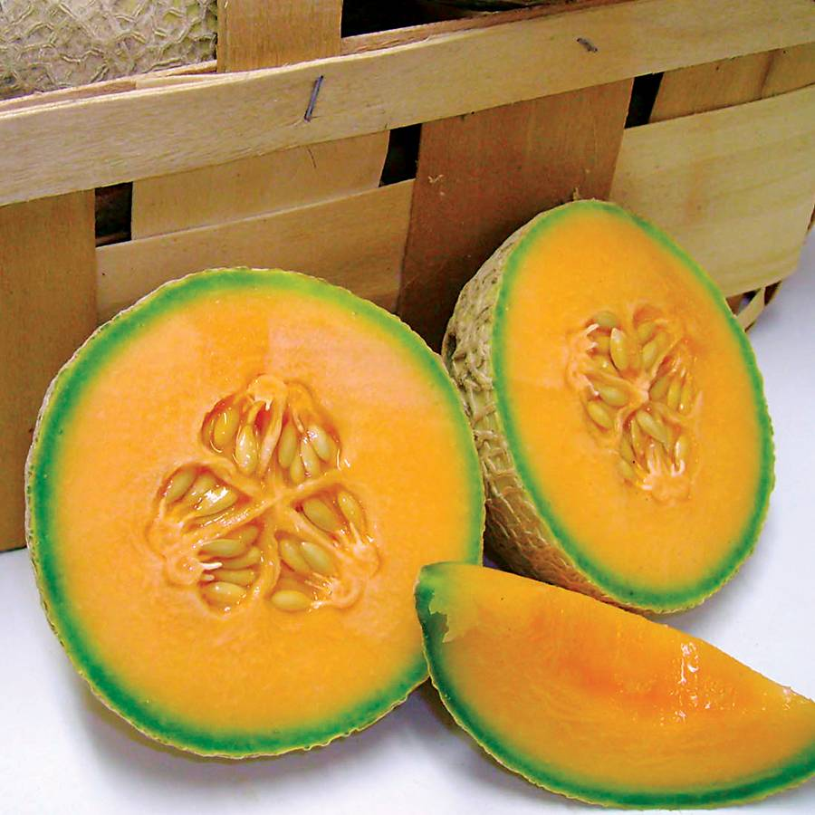 Sugar Cube Hybrid Melon Cantaloupe Seeds Image
