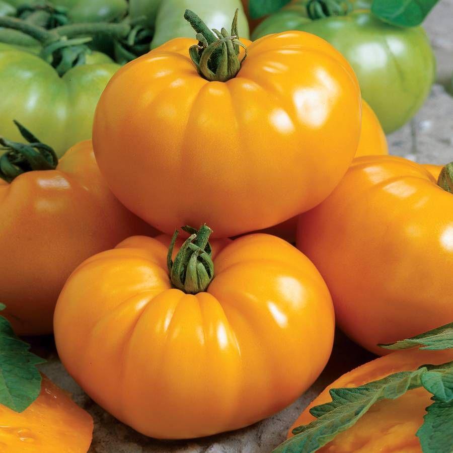 Chef's Choice Yellow Tomato Seeds Image