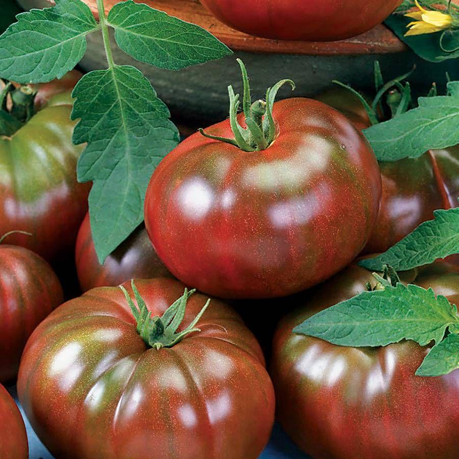 Chef's Choice Black Tomato Seeds Image