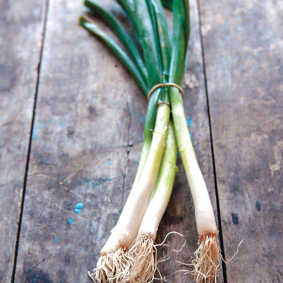 Parade Green Onion Organic Seeds Image