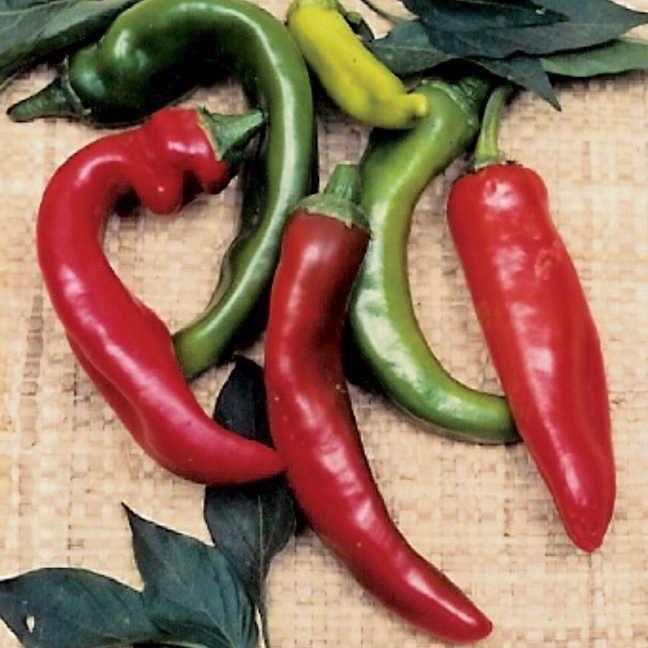 Anaheim Organic Pepper Seeds Image