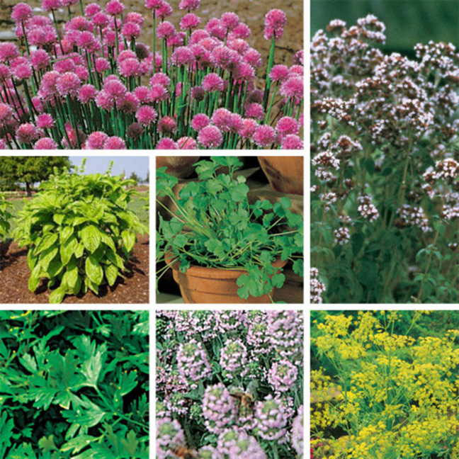 Exclusive Sold Out Organic Herb Seeds Collection