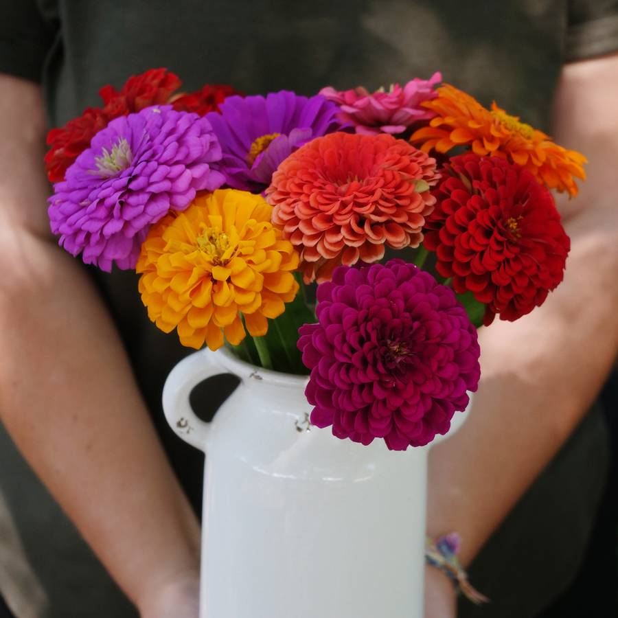 Parks Picks Zinnia Seeds Collection Image