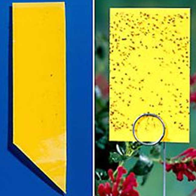 Yellow Sticky Insect Traps - Collection Image