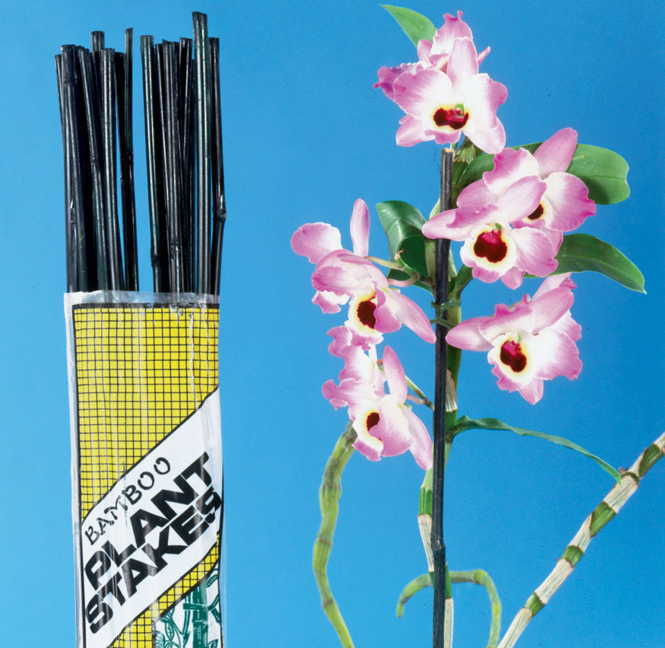 Bamboo Plant Stakes - Set of 12 Image