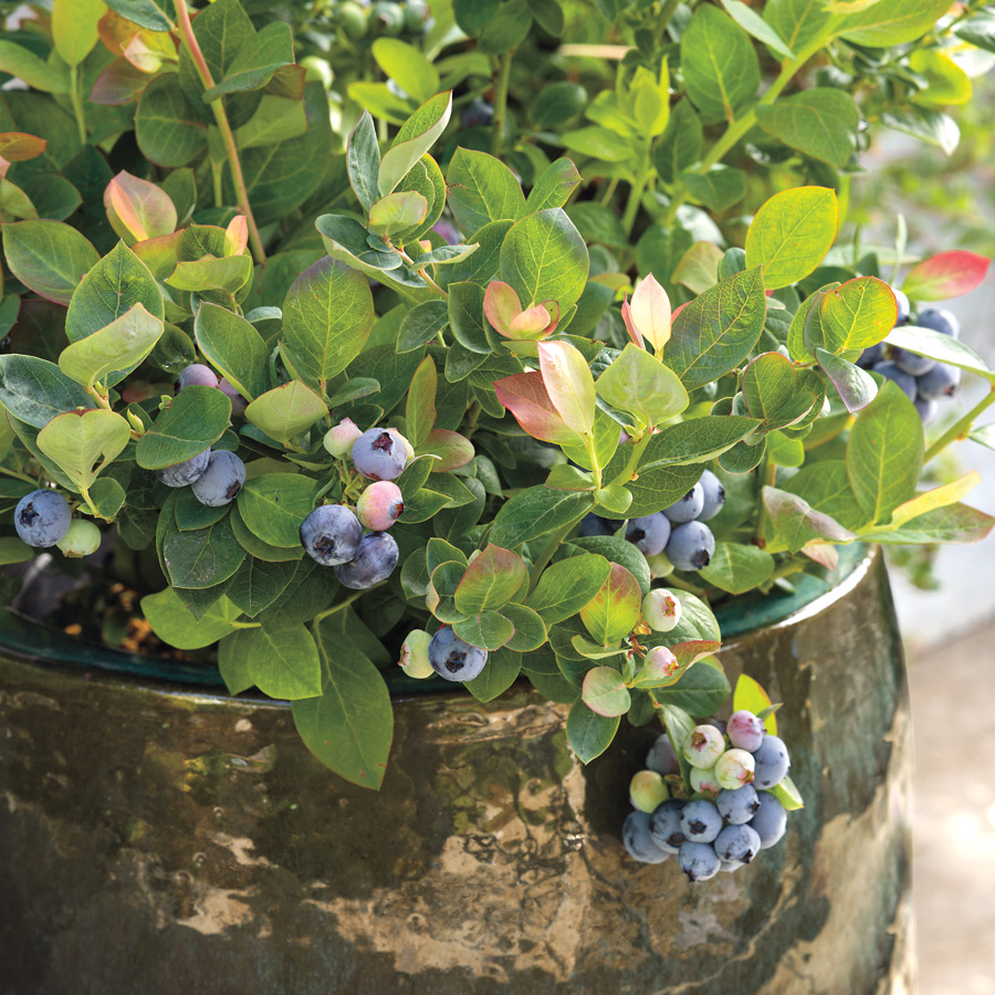 Bushel and Berry® Blueberry Peach Sorbet® Image